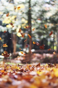 Fall leaves in motion