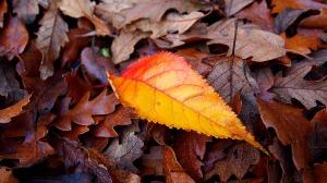Leaf atop pile