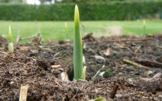 grow-315470_1280